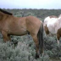 Standing Horses - Reference Photo
