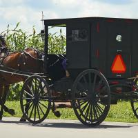 Horse with Amish Buggy (#96703) - Prototype Photo